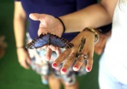 Muzeum Żywych Motyli