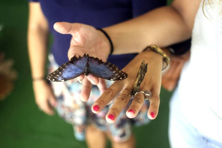 Museum of Live Butterflies