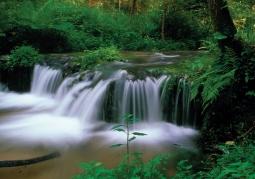 Rezerwat przyrody Nad Tanwią - Park Krajobrazowy Puszczy Solskiej