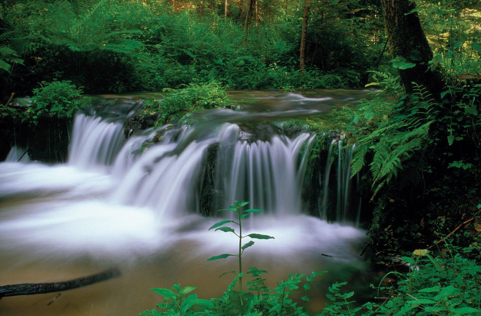 Rezerwat przyrody Nad Tanwią