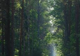 Ścieżka wśród drzew