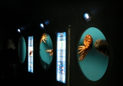 Muzeum Ziemi im. Karola Sabatha