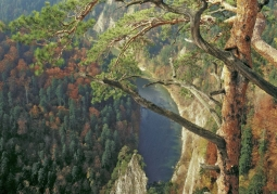 Widok z Sokolicy w stronę Góry Zamkowej