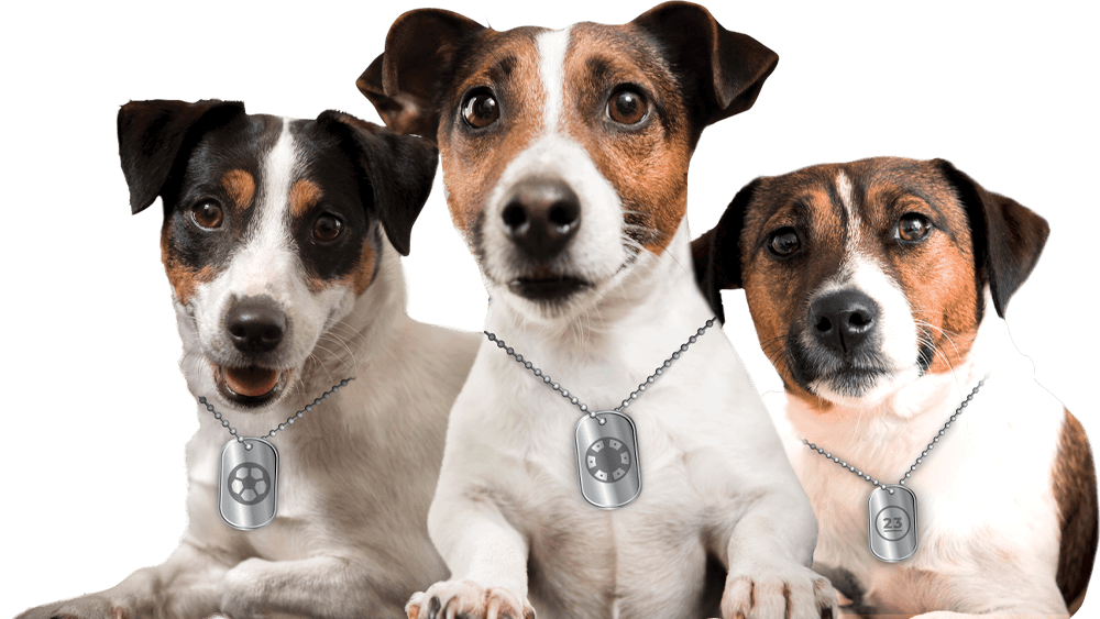 Yobetit Dogs