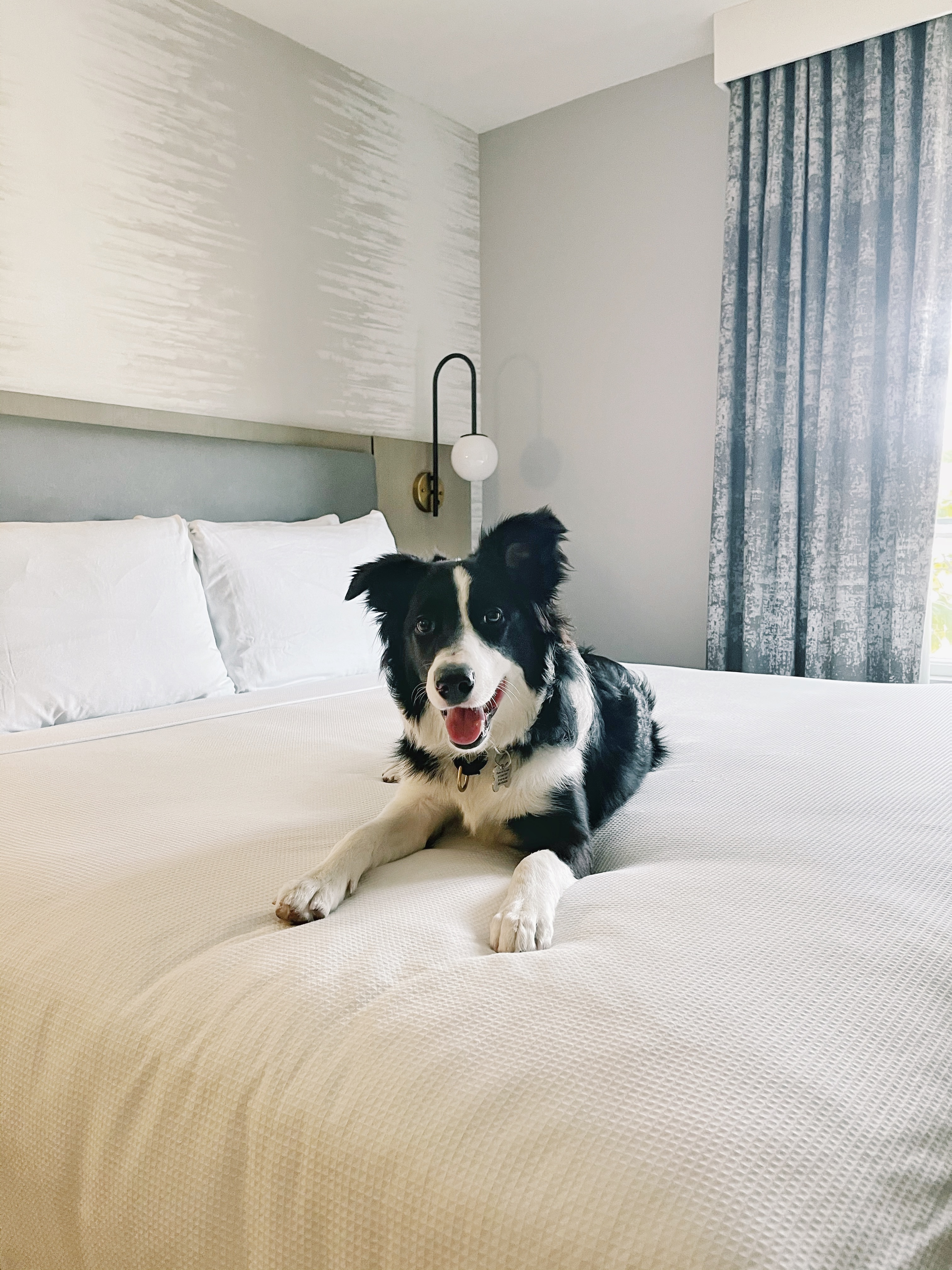 圣塔芭芭拉带狗旅行度假攻略第一篇 图8