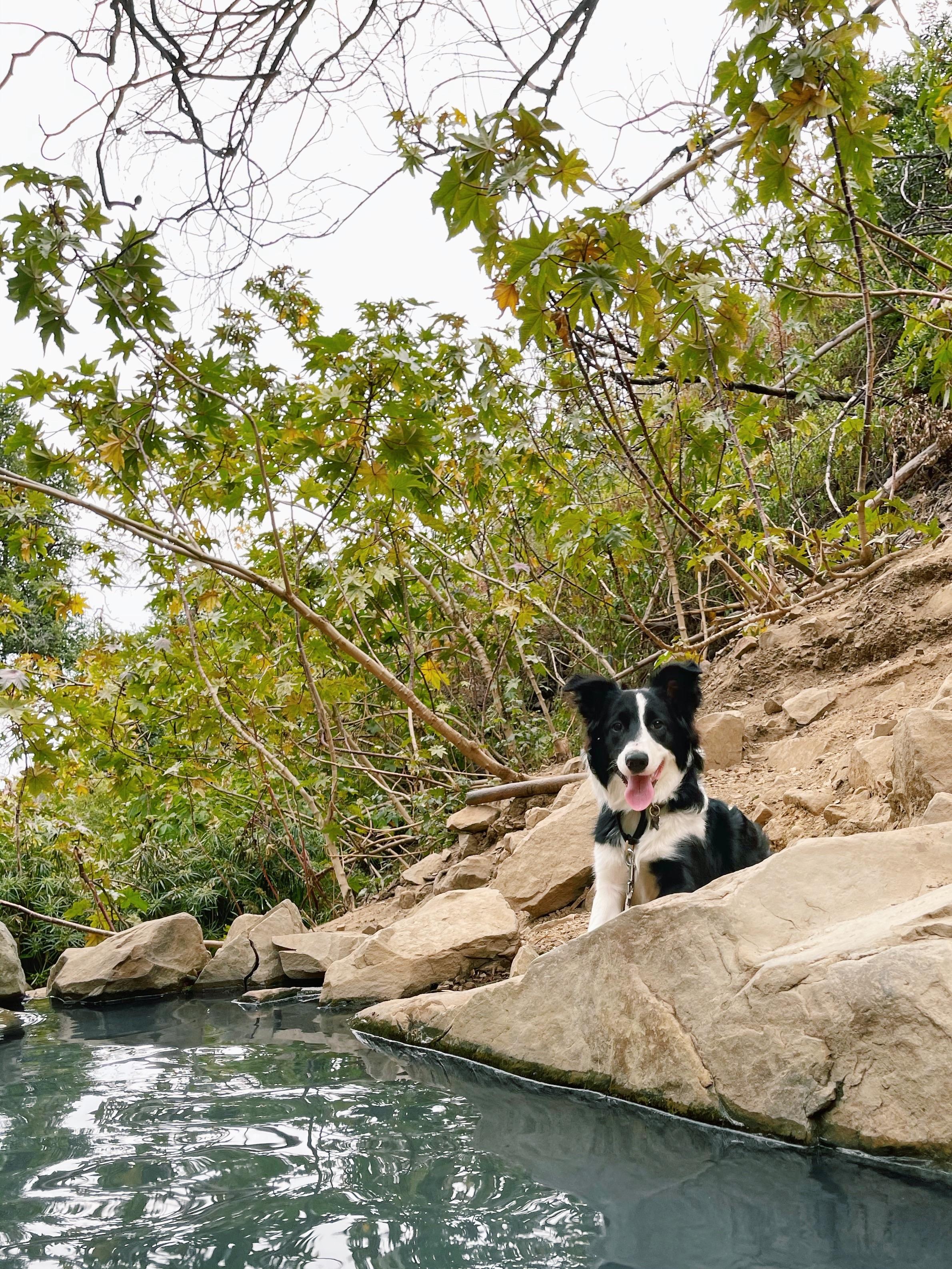 圣塔芭芭拉带狗旅行度假攻略第一篇 图4